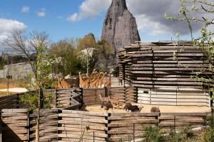 les-girafes-du-zoo-de-vincennes