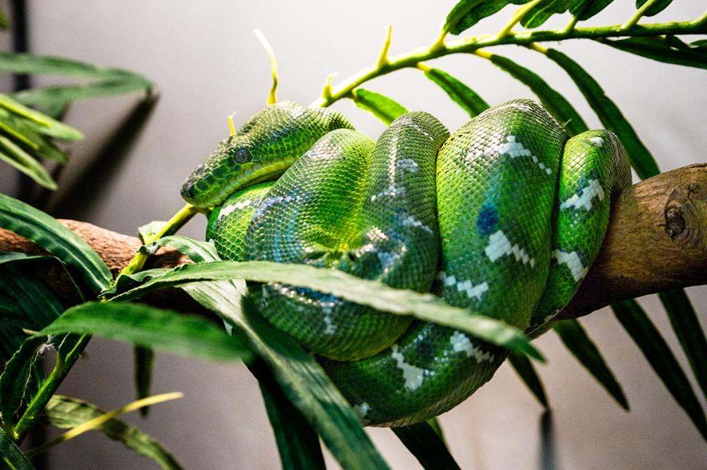reptile-au-zoo-de-vincennes